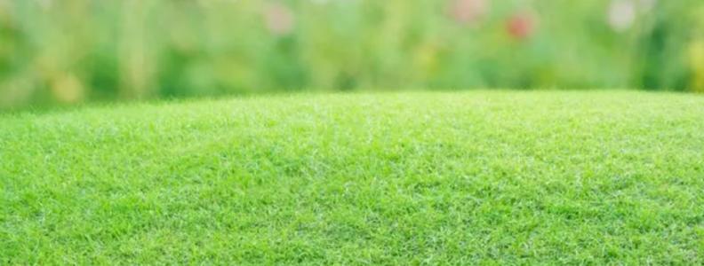 gazon vert jardin